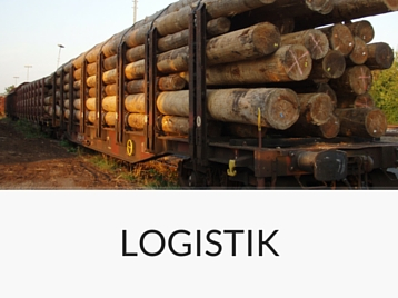 Forstdienstleistungen - Durchforstungen