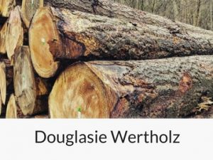 wertholz-douglasie