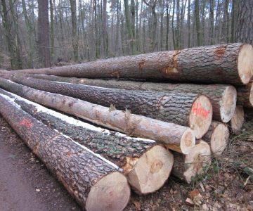 Heimische Holzarten