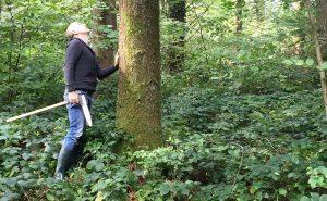 Selbstwerbung - Holzeinschlag - Holzvermarktung