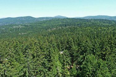 Waldbesitz_Hiram
