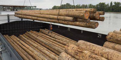 Holzmasten Strommasten aus Holz