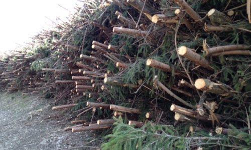 Restholz und Altholz